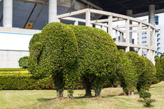 The Bending tree of elephant bonsai. The Bending tree of elephantbon sai Royalty Free Stock Photos