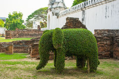 The Bending tree of elephant Stock Photo