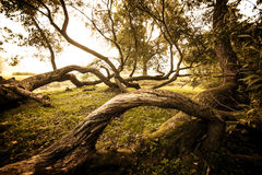 Bending trees Royalty Free Stock Images