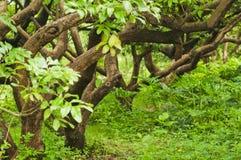 Bending trunks. Many  Bending trunks   in  the  garden Stock Photography