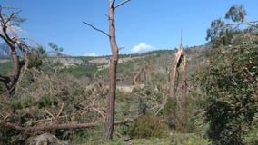 Bene inaspettato nei danni provocati dal maltempo della foresta Parco Turchia di Phaselis stock footage