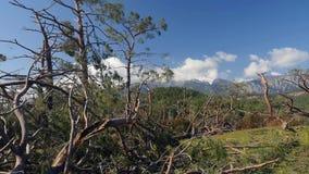Bene inaspettato nei danni provocati dal maltempo della foresta Parco Turchia di Phaselis archivi video