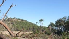 Bene inaspettato nei danni provocati dal maltempo della foresta Parco Turchia di Phaselis video d archivio