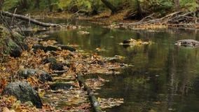 Beneaped jesieni rzeka z bankami zakrywającymi z spadać liśćmi zbiory