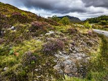 Walking Path through Heathered Hillsides in Scottish Highlands. Beneath a moody sky, a gravel walking path winds through the heathered hillsides of Mallaig, in Royalty Free Stock Photography