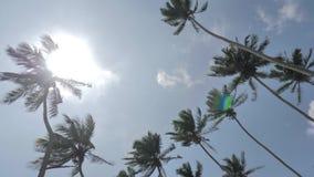 Beneath Palms Tropical Sri Lanka Slowmotion 4k. Footage of some palm trees in Sri Lanka. Slowmotion shot in 4k stock video footage