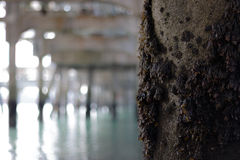 Beneath a pier Royalty Free Stock Image