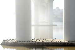 Beneath a river bridge in a misty morning Stock Image