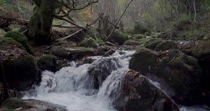 Benedenwaartse beweging van een boom dichtbij de rivier aan de cursus van de rivier stock footage