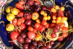 Benedizioni di autunno Fotografie Stock