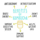 Benefícios de saúde do kombucha ilustração do vetor