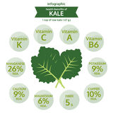 Benefit health of kale, info graphic food, vegetable vector Royalty Free Stock Images