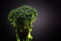 Fresh broccoli with a black background stock photo