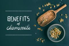 Benefits of chamomile tea, text. Dried chamomile flowers in bowl and wooden shovel spoon on dark background, top view with copy. Space for your design. Healing royalty free stock image