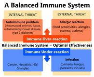 Immune system. The benefits of having a balanced immune system Stock Images
