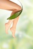 Benen en groen blad royalty-vrije stock foto's