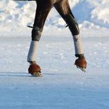 Benen van een draverpaard en een paarduitrusting details Stock Foto
