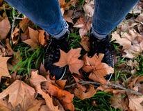 Benen van een vrouw die in het herfstesdoornblad lopen stock foto