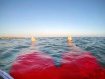 Benen van een zwemmer in het rode swimwear drijven in het overzees Stock Fotografie