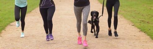 Benen van Vrouwen die bij het Park met Huisdierenhond lopen Royalty-vrije Stock Fotografie