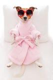 Benessere della stazione termale del cane Fotografia Stock
