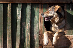 The benevolent dog Royalty Free Stock Photography