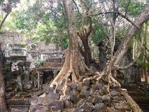 Beng Mealea吴哥寺庙,柬埔寨 免版税库存照片