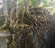 Beng Mealea吴哥寺庙,柬埔寨 免版税库存图片