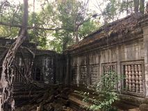 Beng Mealea Angkor Temple, Kambodja stock foto's