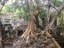 Beng Mealea  Angkor Temple, Cambodia. Beng Mealea or Bung Mealea is a temple in the Angkor Wat period located 40 km east of the main group of temples at Angkor Royalty Free Stock Photos