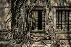 Beng Mealea roots on the window. Beng Mealea roots on the typical khmer window Stock Photos
