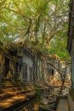 Beng Mealea-tempelruïnes in bomen en wortels in jungl worden behandeld die Royalty-vrije Stock Afbeeldingen
