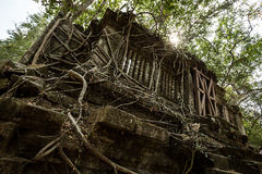 Beng Mealea windows and roots. Covering Stock Images