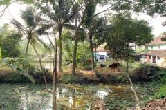 Bengaals dorp royalty-vrije stock afbeelding