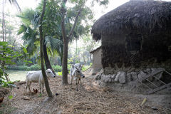 Bengaals dorp royalty-vrije stock afbeeldingen