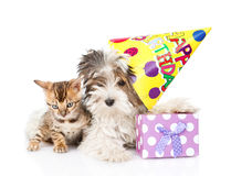 Bengal cat and Biewer-Yorkshire terrier puppy with birthday hat. isolated on white Royalty Free Stock Images