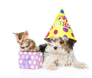 Bengal cat and Biewer-Yorkshire terrier puppy with birthday hat. isolated Royalty Free Stock Image