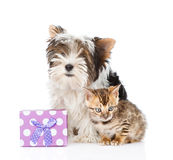 Bengal cat and Biewer-Yorkshire terrier puppy with gift box. Royalty Free Stock Image