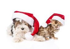 Bengal cat and Biewer-Yorkshire terrier puppy with red santa hat. isolated on white Stock Photo