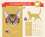 Bengal Cat breed  infographics Royalty Free Stock Photo