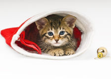Bengal Cat in a Christmas Hat Stock Images