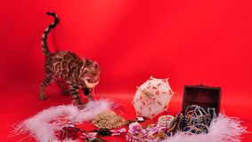 Bengal cat and Jewellery Royalty Free Stock Photography