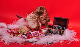 Bengal cat and Jewellery Stock Photography