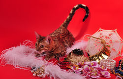 Bengal cat and Jewellery Stock Image