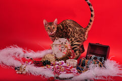 Bengal cat and Jewellery Royalty Free Stock Image