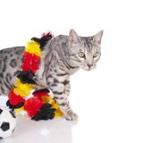 Bengal cat with soccer ball Royalty Free Stock Photo