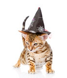 Bengal cat with witch hat. isolated on white background Royalty Free Stock Image