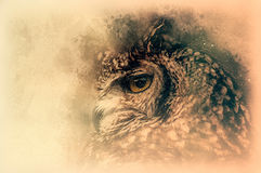 The Bengal Eagle-Owl sketch. Digital illustration Stock Image