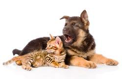 Bengal-Kätzchen, das mit Schäferhundhündchen liegt Lizenzfreies Stockfoto