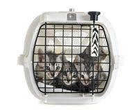 Bengal-Katze in der Hundehütte lizenzfreie stockfotos